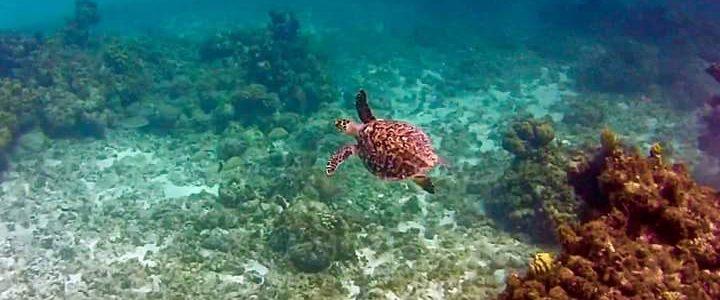 Sea Turtle in South Caicos